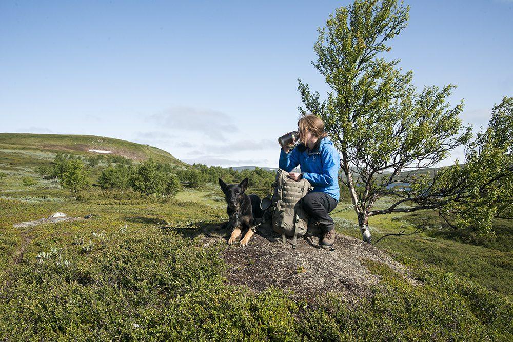 Hiking and backpacking with German Shepherd in Tänndalen Sweden