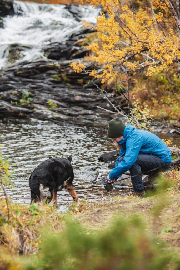 Vandra med hund i Tänndalen
