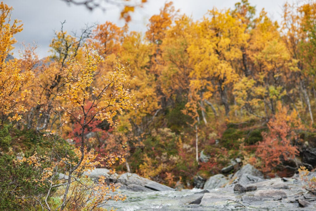 Anderssjöåfallet på hösten