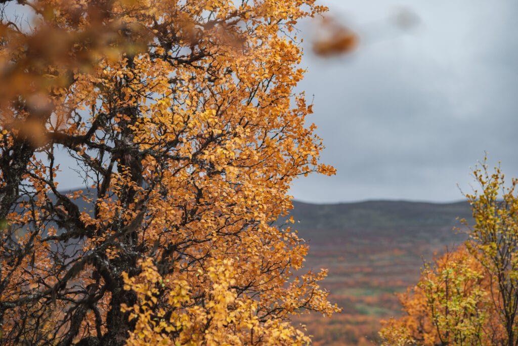 Utsikt från Anderssjöåfallet