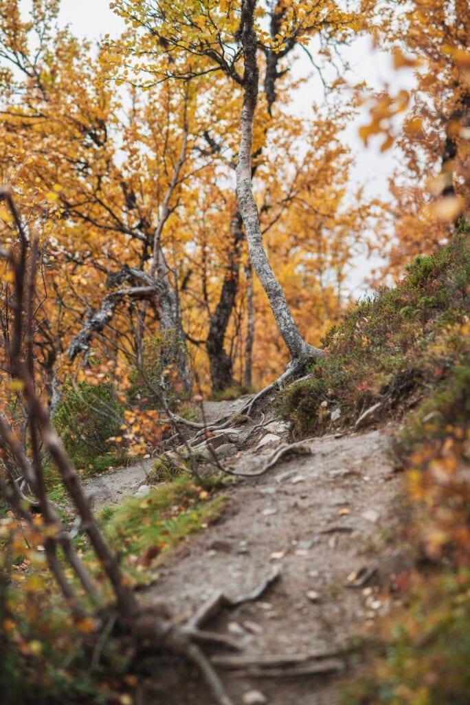 Vandra på hösten - fjällvandring i Tänndalen