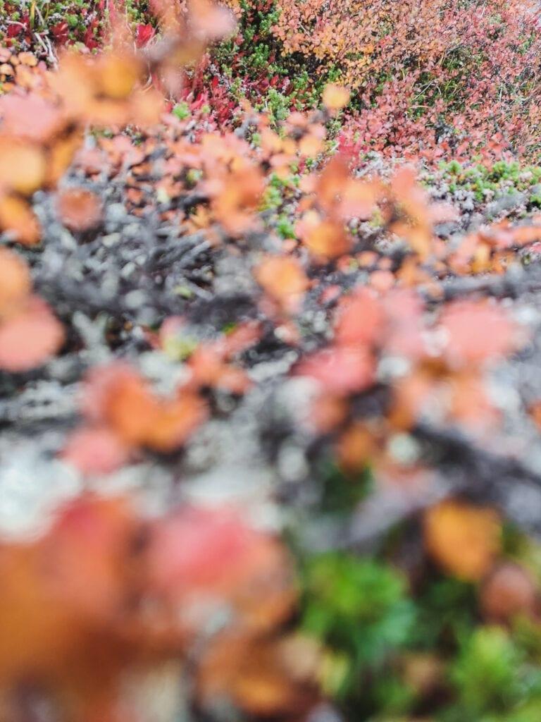 Vandra på hösten i Tänndalen