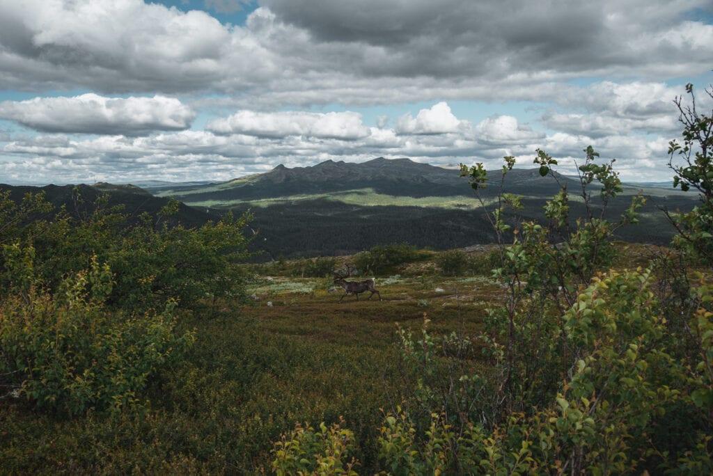 Utsikt från Funäsdalsberget mot Anåfjället