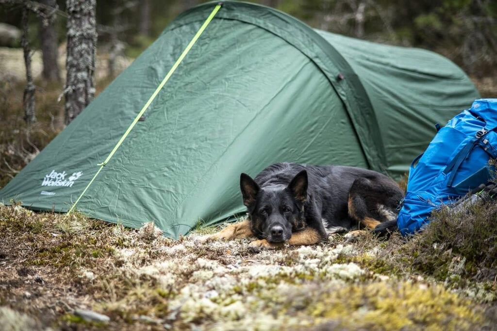 Jack Wolfskin Gossamer II tälta med hund