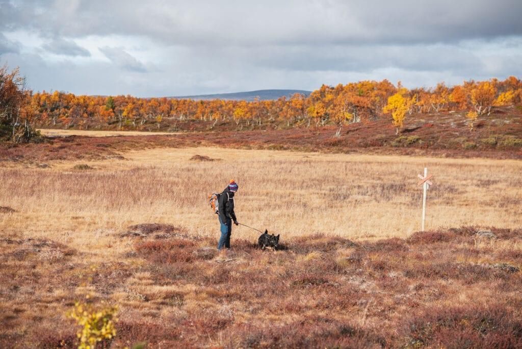 Vandring i fjällen på hösten med hund