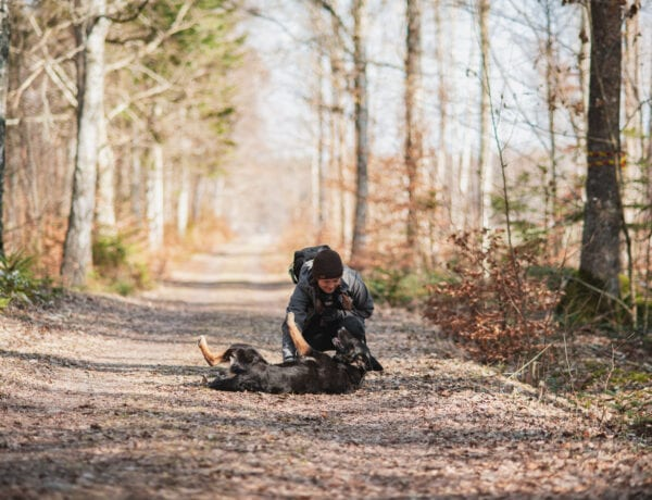 Vandring på Biskops Arnö med hund