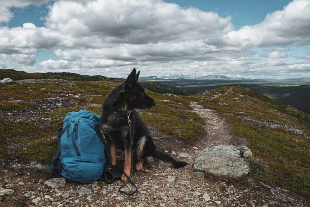 Vandring i Funäsfjällen med hund