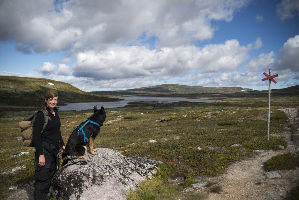 Joggingsele till hund
