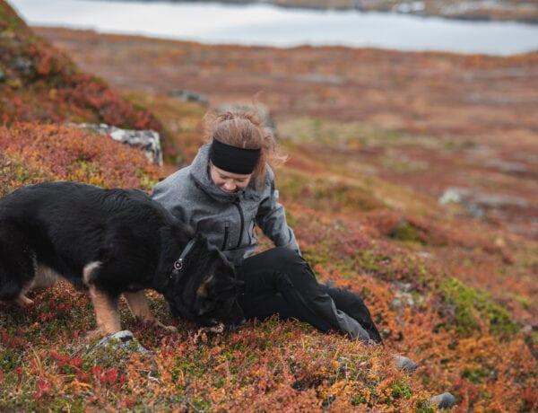 Hund i fjällen på vandring