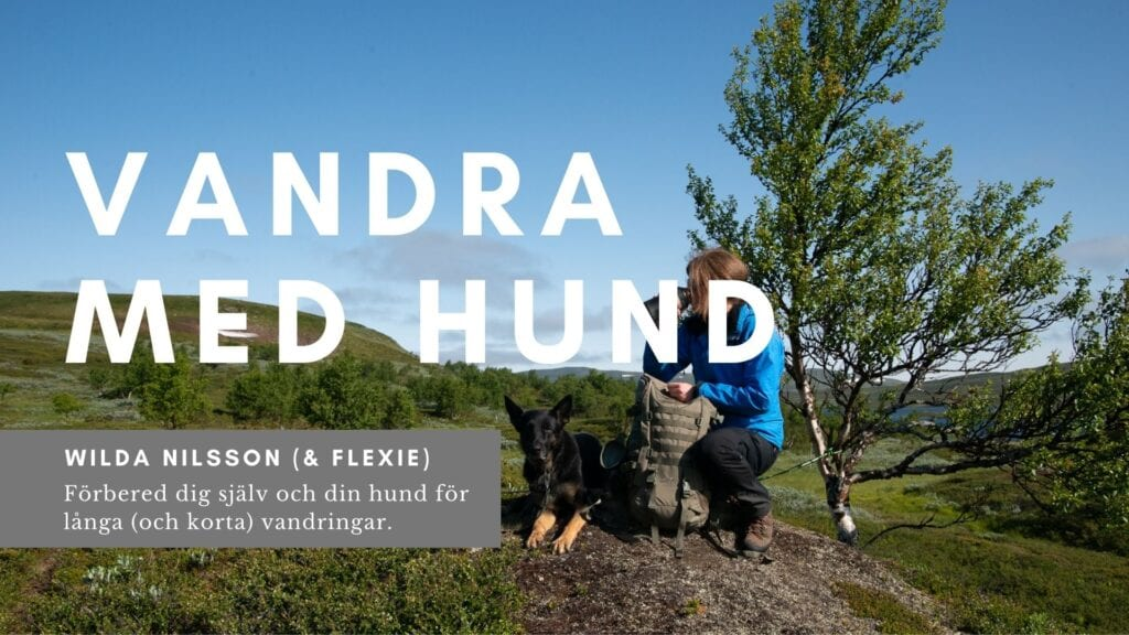 Omslag till Vandring med hund av Wilda nilsson