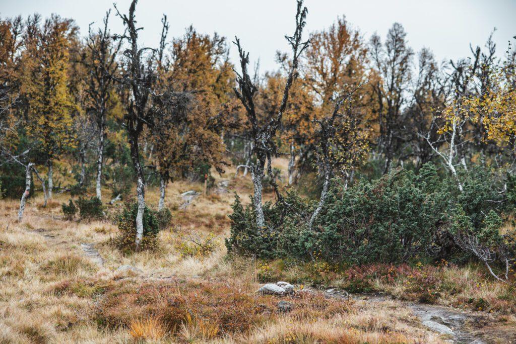 Tänndalen på hösten