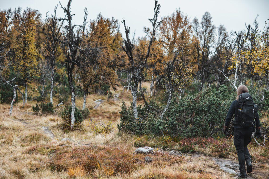 Vandra i fjällen på hösten