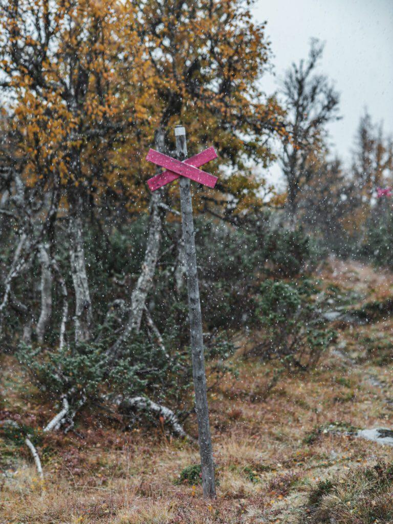 Ledkryss på hösten