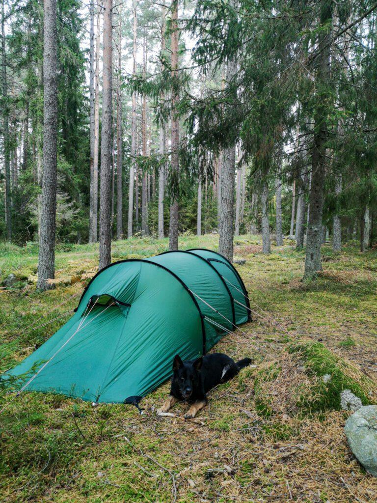Hilleberg Nammatj GT och schäfer i skogen